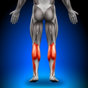 Which muscles to stretch, gastrocnemius and soleus